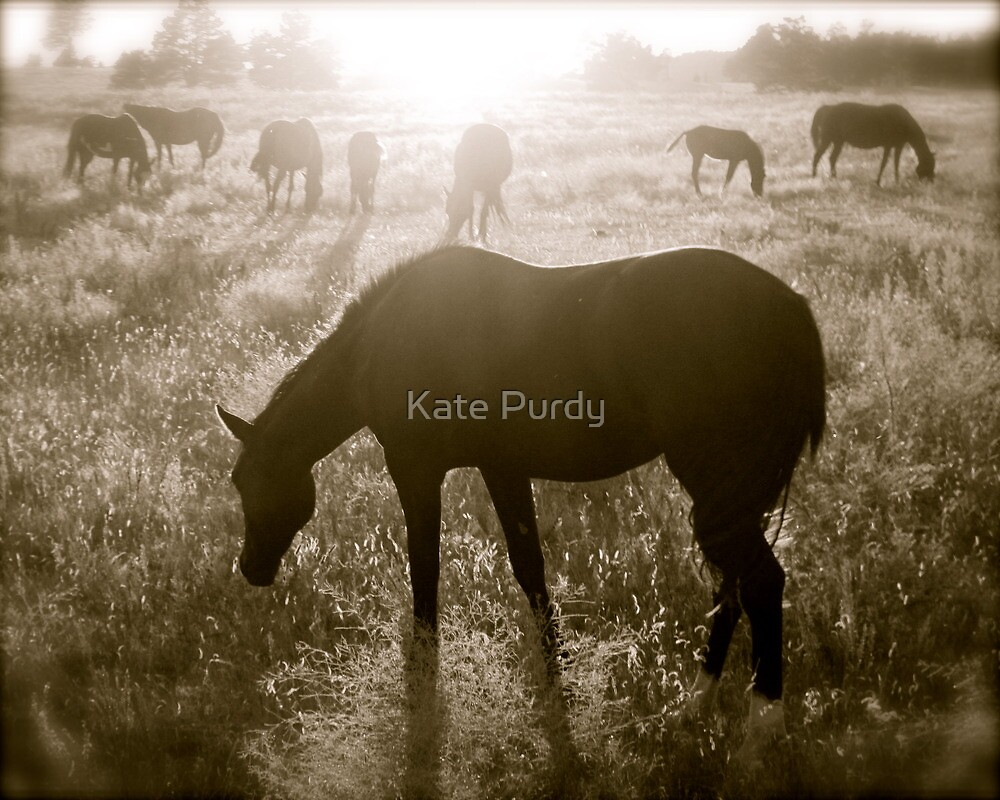 As the Day Ends by Kate Purdy