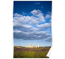 Modern houses, purple flowers and white clouds Poster