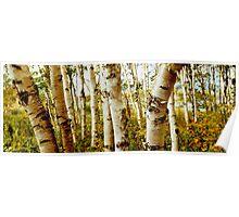 Nova Scotia Trees Poster