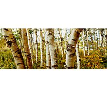 Nova Scotia Trees Photographic Print