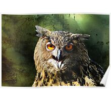 Manipulated Owl Poster