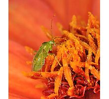 Aphid 2 Photographic Print