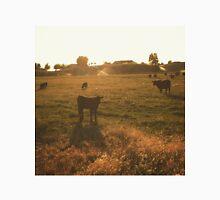 Cattle at sunset Men's Baseball ¾ T-Shirt