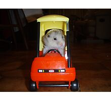Hamster trip Photographic Print