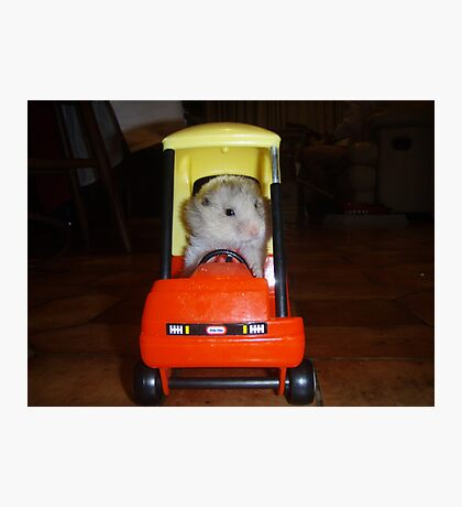 Hamster trip Photographic Print