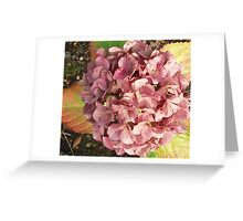 Autumn Hydrangea Greeting Card