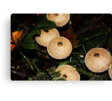 Fungi in the woods one day Canvas Print