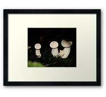 Fungi in the woods one day two Framed Print