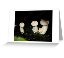 Fungi in the woods one day two Greeting Card