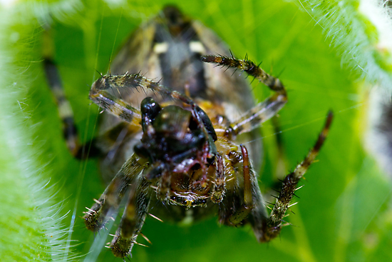 about a spider and its lunch by janko