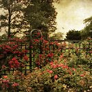 Rose Trellis by Jessica Jenney