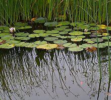 The Pond by Rebecca Cozart
