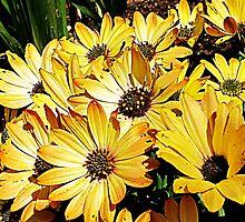 Sunny Side Up by Brenda Boisvert