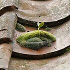 Moss Side? by nickspics