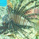 Lion Fish by dmcfadden