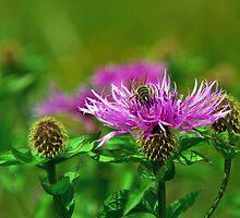 Gathering Wild Nectar by Kasia-D