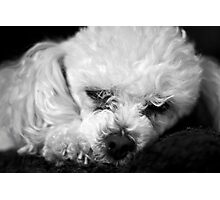 Macy Sleeping Photographic Print