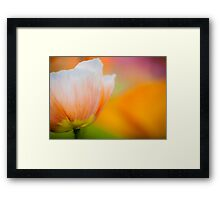 Orange & White Poppy Framed Print