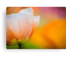 Orange & White Poppy Canvas Print