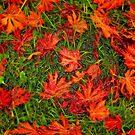 Plastic Autumn by fotoholic