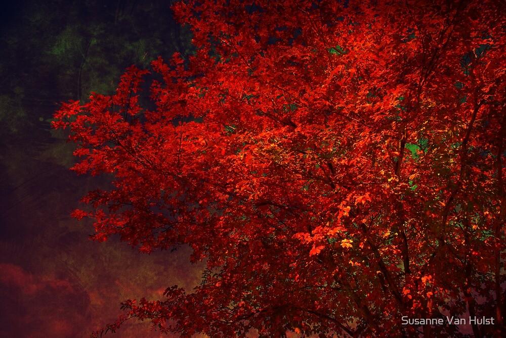 Red Maple Tree by Susanne Van Hulst