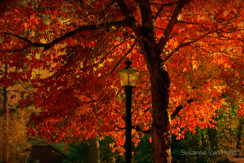 I'll  wait for you by the maple tree by Susanne Van Hulst