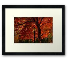 I'll  wait for you by the maple tree Framed Print
