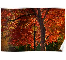 I'll  wait for you by the maple tree Poster