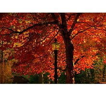 I'll  wait for you by the maple tree Photographic Print