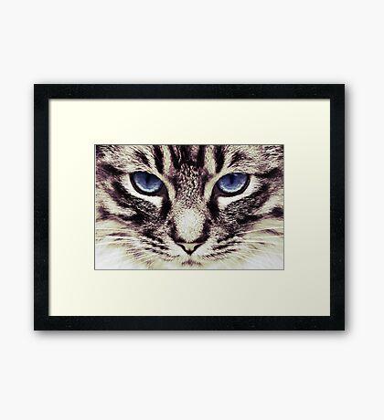 Demi Kitty Framed Print