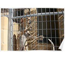 Protectora de Animales y Plantas de Málaga 8 Poster