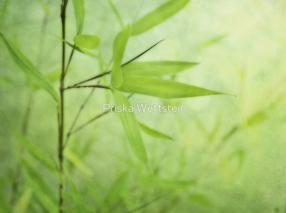 Bambou Jardin by Priska Wettstein