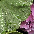 Rain Relief - Hydrangea by Barbara Burkhardt