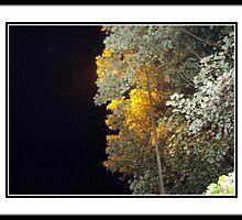 Walk at night 2 by ANDREW BARKE