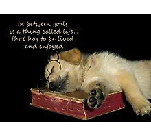 Dog's Life Photographic Print