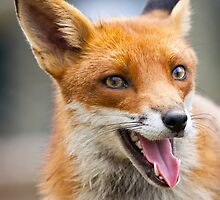 Fantastic Mr Fox by Peter Denness