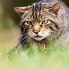 Look Who's Stalking by Peter Denness