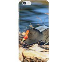 Swamp Hen on Nest iPhone Case/Skin