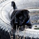 Tire Puppy by Barbara Anderson