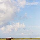 Banker Horse on Bird Shoal by NCBobD
