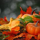 Springing into Fall by Sunshinesmile83