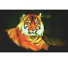 Here Kitty Kitty Photographic Print