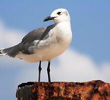 Seagull by DebbieCHayes