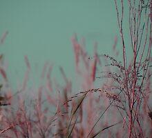 Summer Grass 30 by vigor
