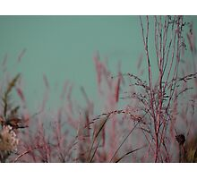 Summer Grass 30 Photographic Print