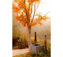 Burst of Orange Photographic Print