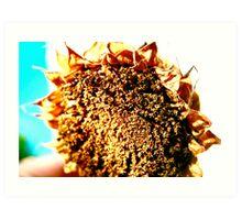 Sunflower - A Summers Day Art Print