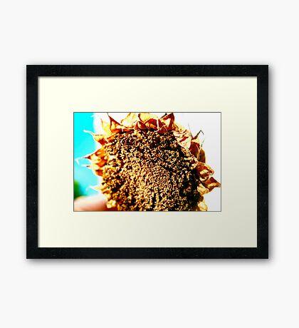 Sunflower - A Summers Day Framed Print