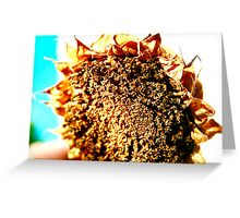 Sunflower - A Summers Day Greeting Card