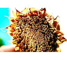 Sunflower - A Summers Day Photographic Print